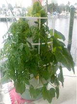 hydroponic tower on a sailboat